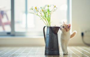 Цитаты про кошек