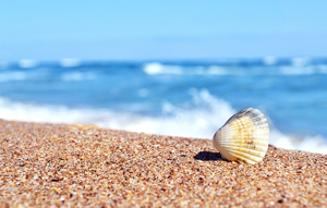 Цитаты про море